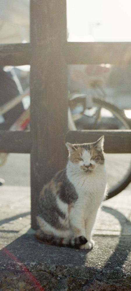 座っている亀柄の猫